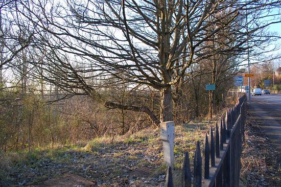 Uddingston Semi-Jubilee trees