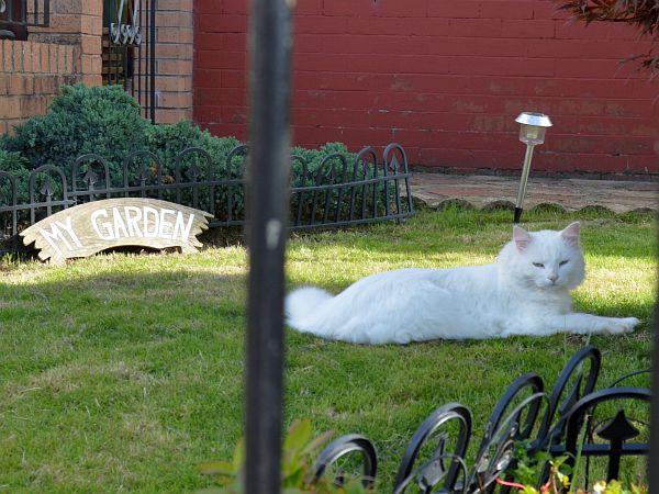 My Garden Cat