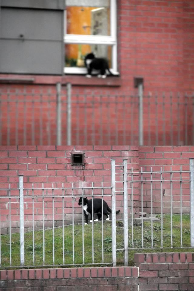 Cat Focus Fail