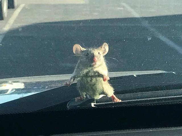 Squeaking Wipers
