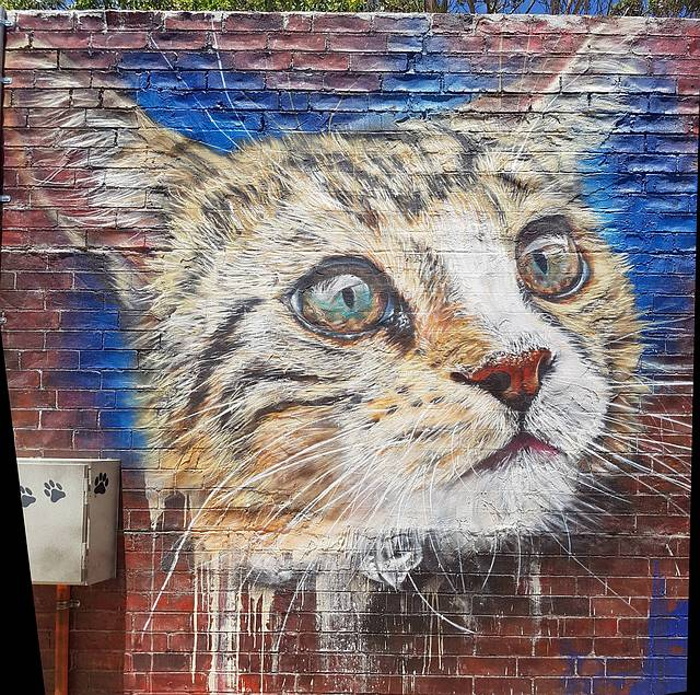 Unknown Cat Mural
